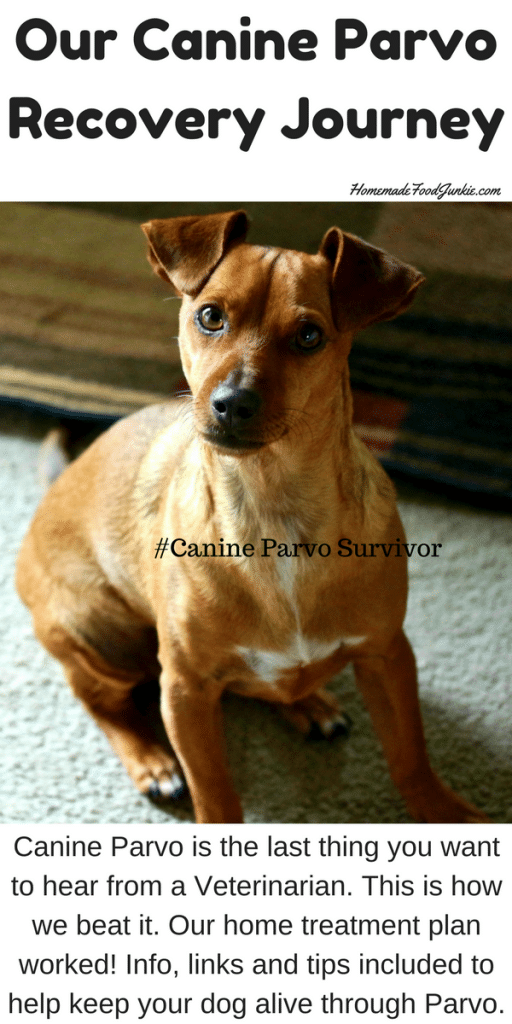 Our Canine Parvo Recovery Journey Parvo, Canine, Rescue