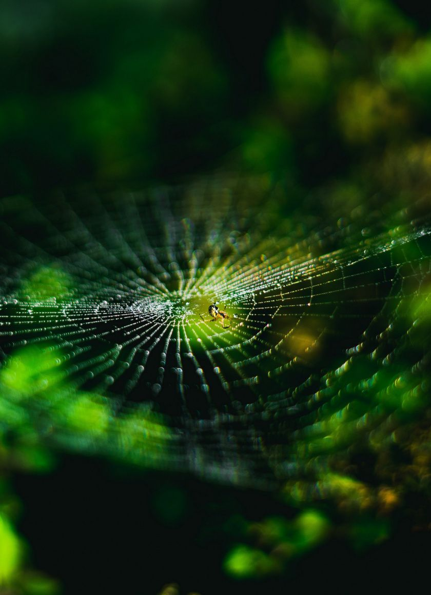 840x1160 Spider Web Web Insect Macro Wallpaper Spider Web