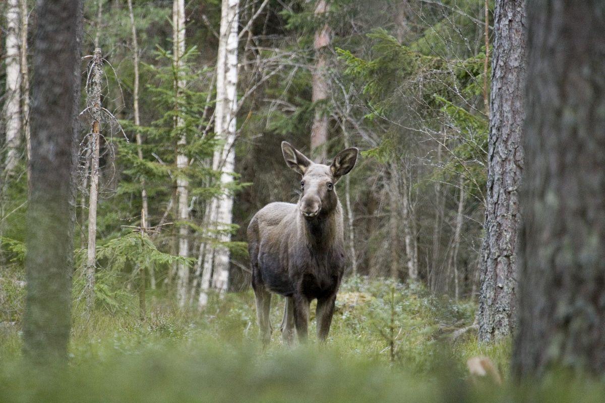 Gratis Bilder Skog