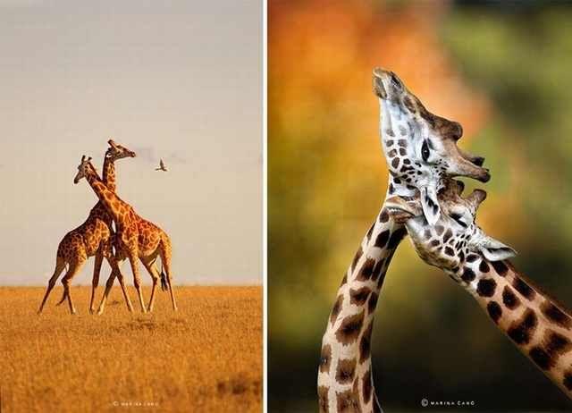 Fotos de animales de Marina Cano