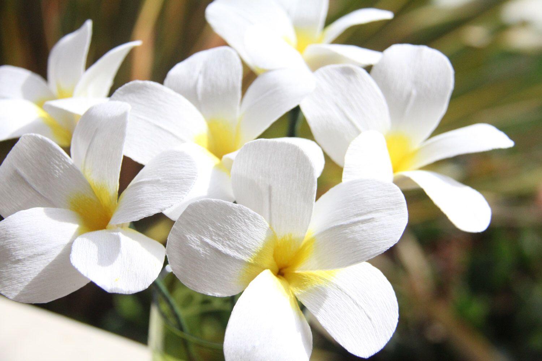 Crepe Paper Flowers  Plumeria by FlowerBazaar on Etsy