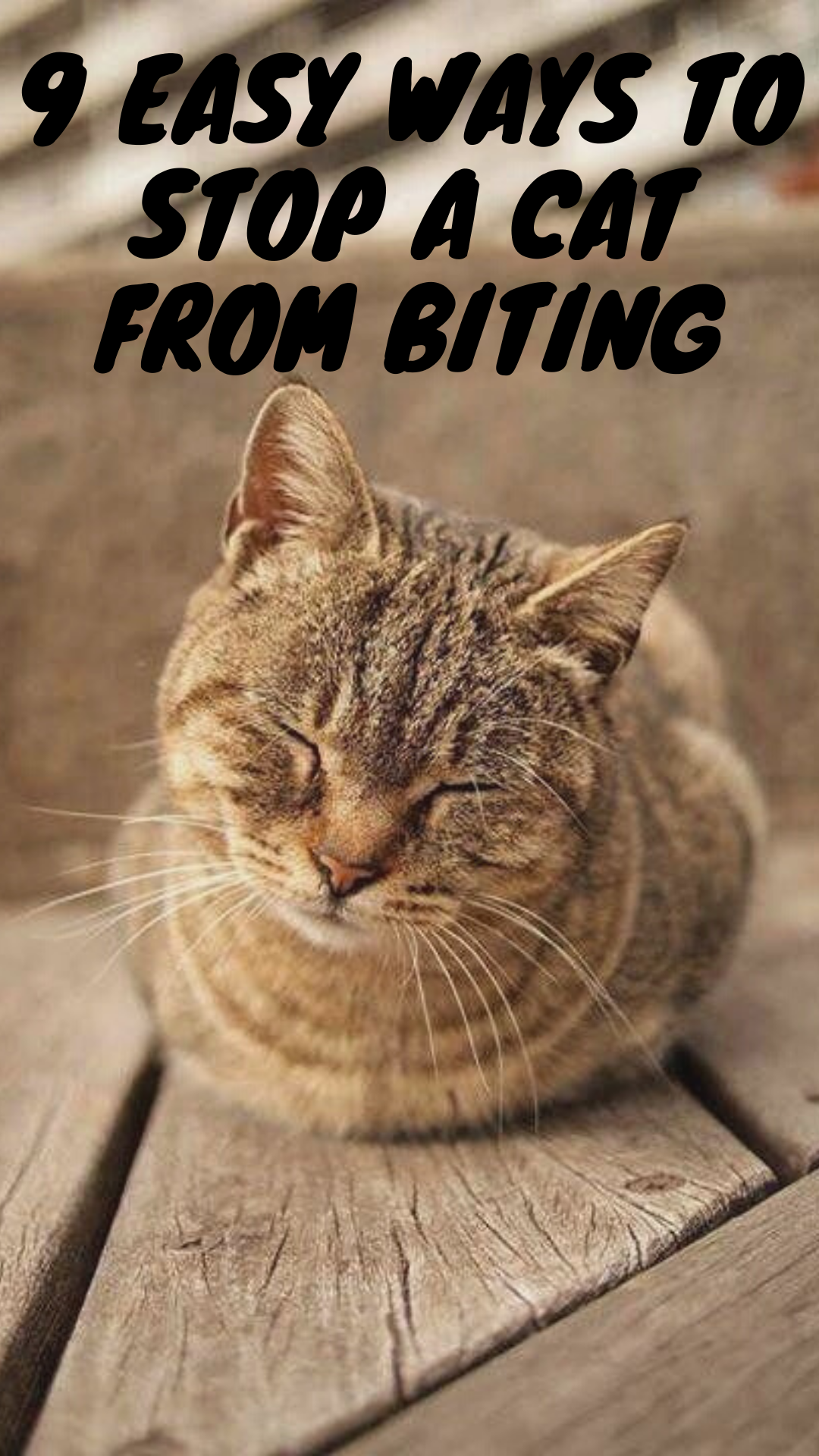 9 Easy Ways To Stop A Cat From Biting Cats Funny Cats Cat Facts