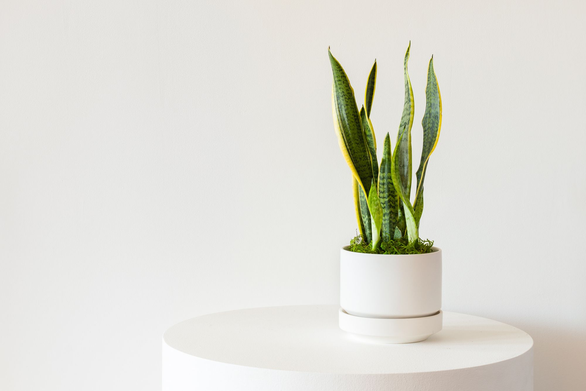 For plants big and small, short or tall, our #ScandinavianCollection has  the looks to rule them all!   Snake plant, Snake plant indoor, Plants