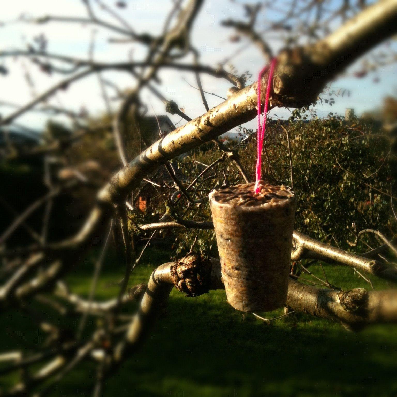 Diy-fuglekugler-hjemmelavet-fuglefoder-neon-have-efterår-vinter ...