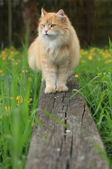 nice pic & nice cat