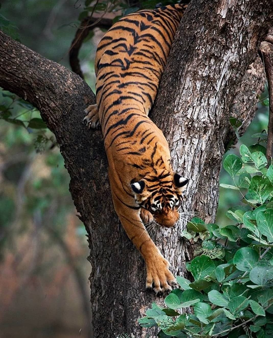 . Photo by @sachin_rai_photography A rather rare but the ...