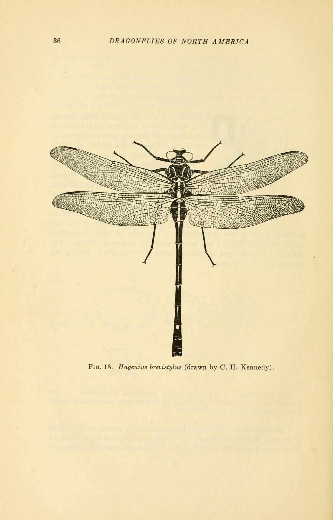 A handbook of the dragonflies of North America | Dragonflies ...