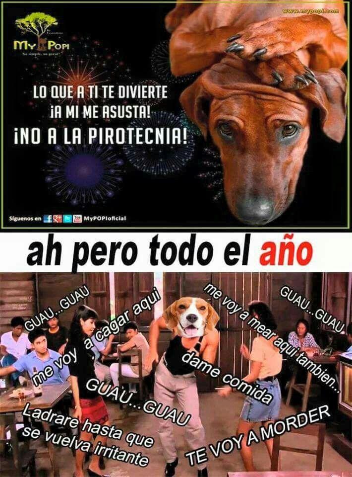 Pin By Ximena Zavaleta On Funny Memes Funny Images Humor