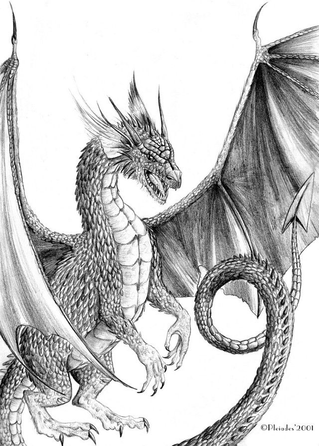 One of my dragon drawings. A dragon hanging on a corner of the paper ...
