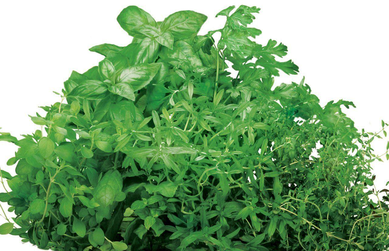 Amazon.com : AeroGarden Italian Herb Seed Kit : Plant Germination Kits :  Patio,