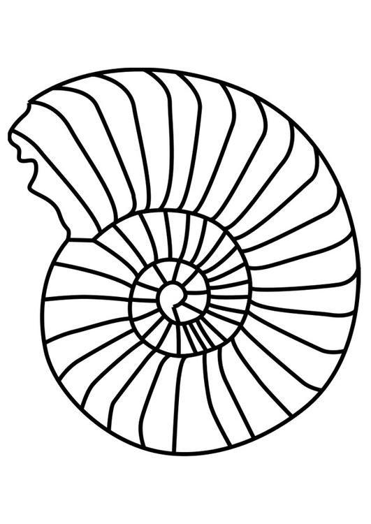 coloring page ammonite mollusc  img 27194  dinosaur