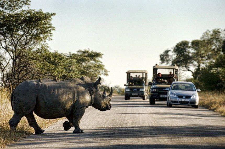 (4) Safari-Test in Südafrika - Nähe zum Wildtier: Krugerpark: Der - Südafrika - Reise - Süddeutsche.de
