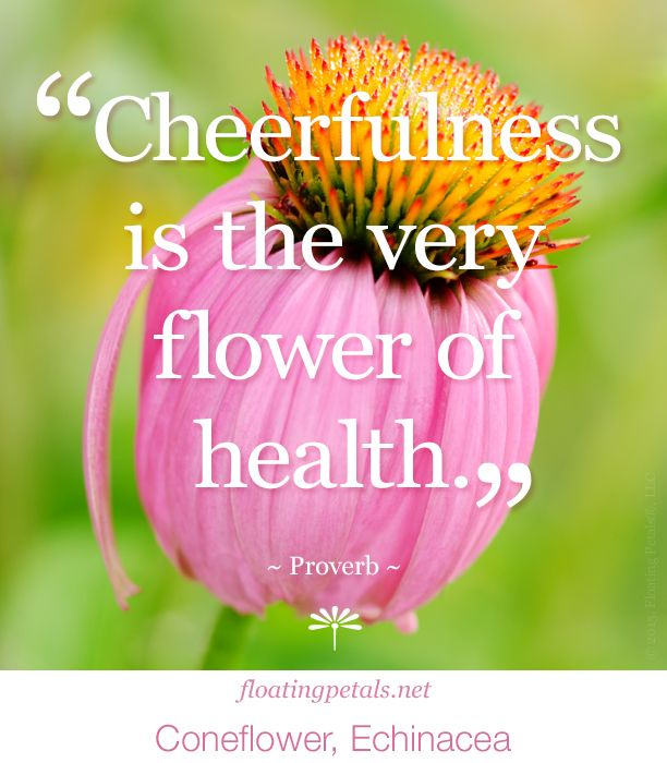 Cheerfulness Is The Very Flower Quotes Echinacea Flowers Photography