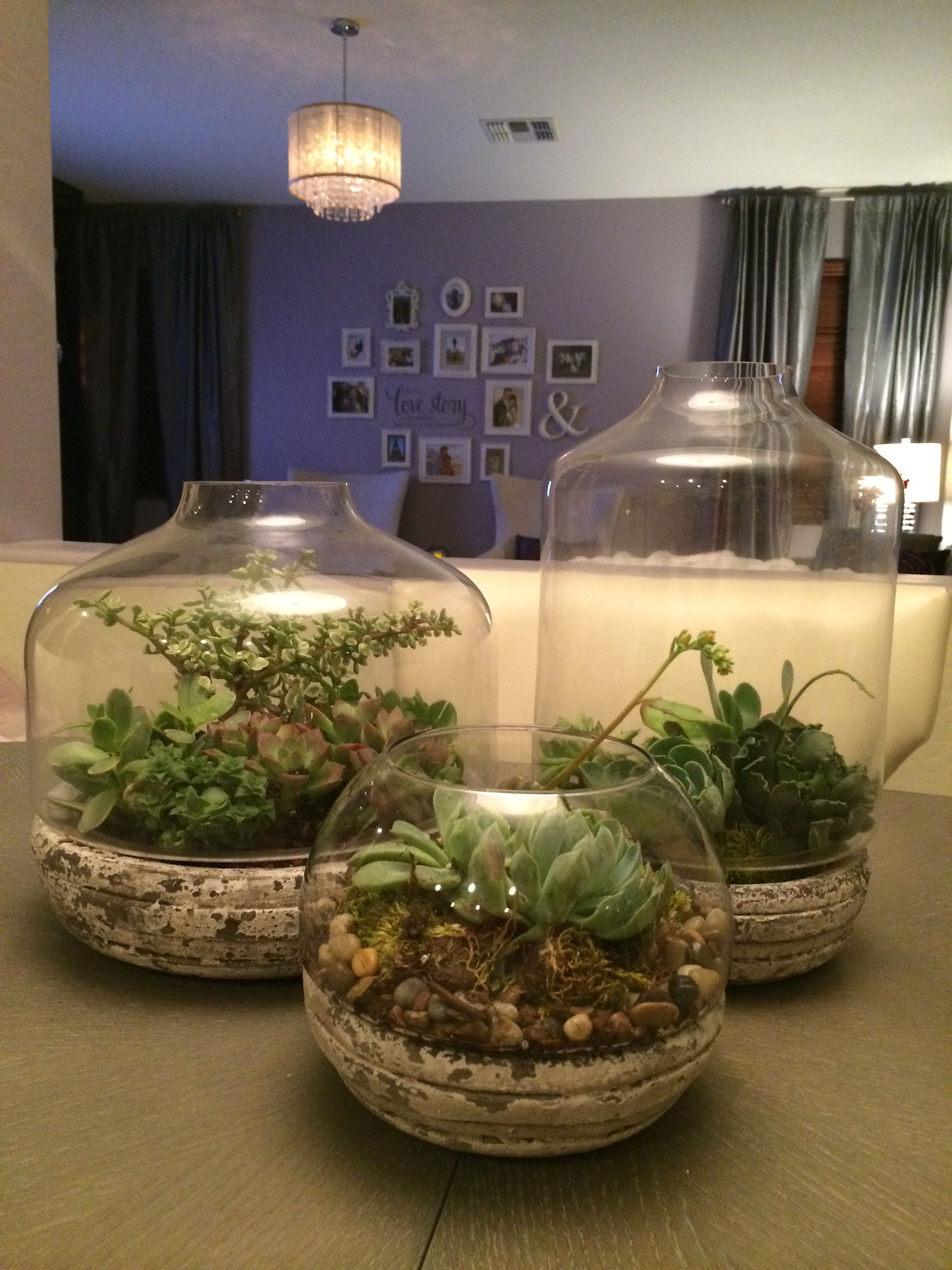 Dining Table Centerpiece Using Succulents From West Elm Home Depot And Terrariums From Wo Dining Room Centerpiece Dining Table Decor Dining Table Centerpiece
