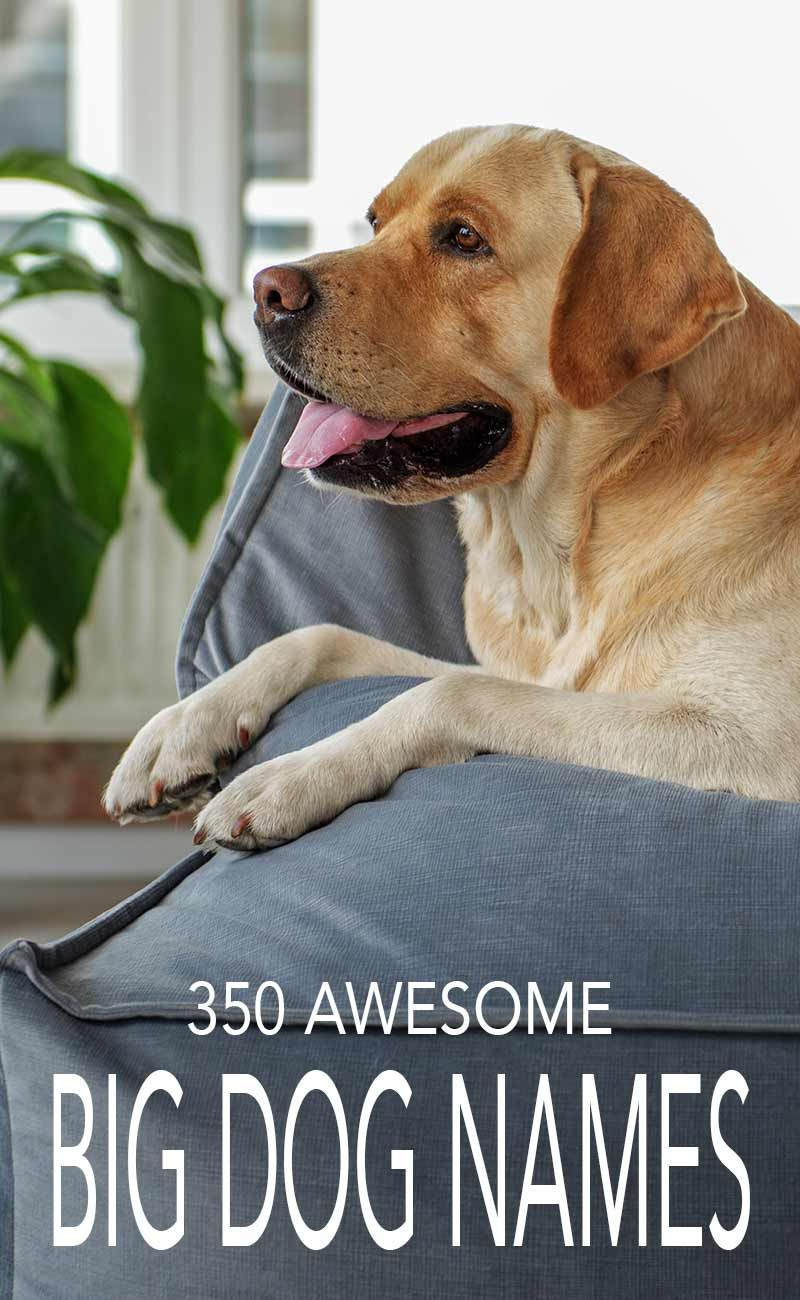 Big Dog Names Over 350 Awesome Ideas Big Dog Names Dog Names