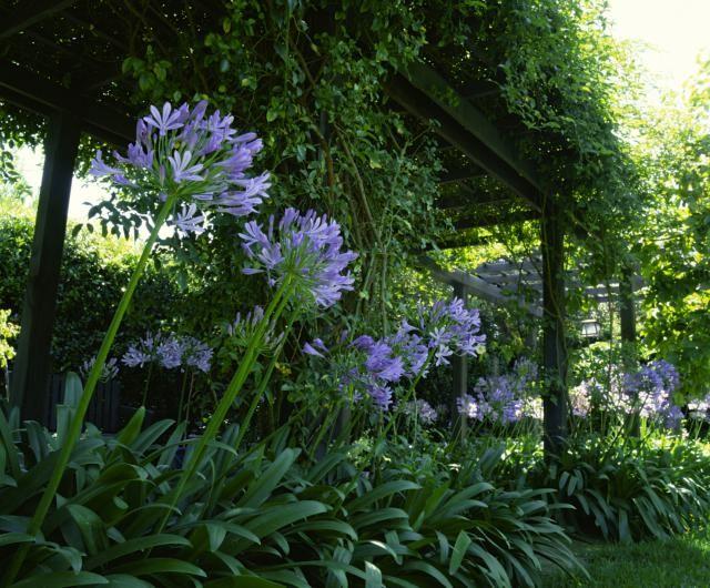 Plantas para patios con sombra el agapanto jardines for Arbustos para patios
