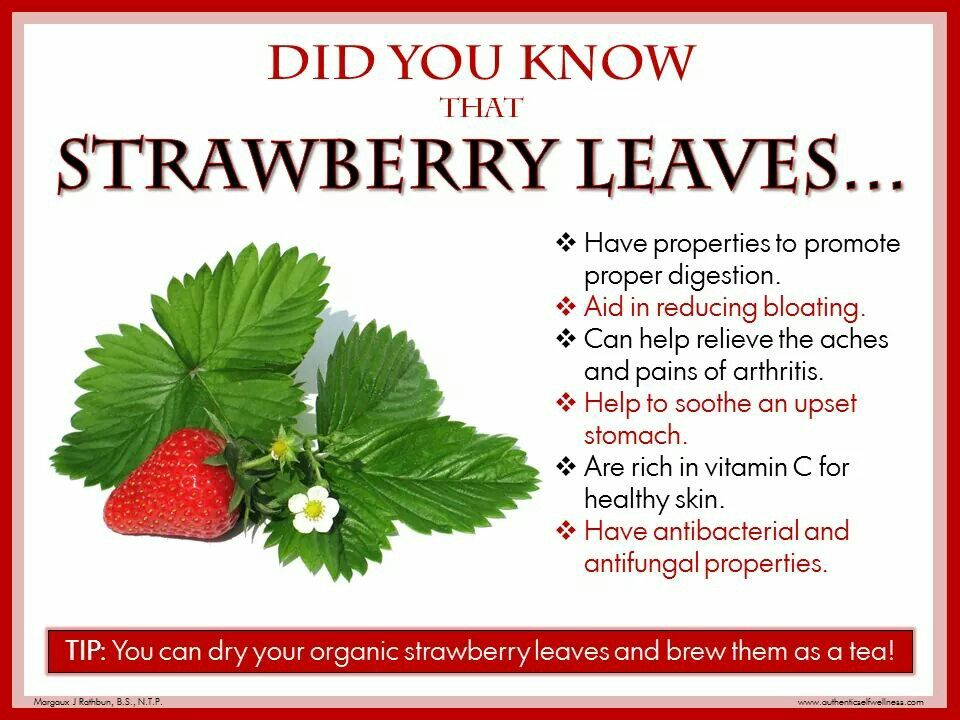 You Can Use The Strawberry Leaves Helpful Ideas
