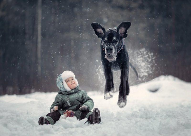 Grobe Hunderassen Als Haustiere Welche Sind Die Vor Und Nachteile Hunde Rassen Haustiere Hunderassen