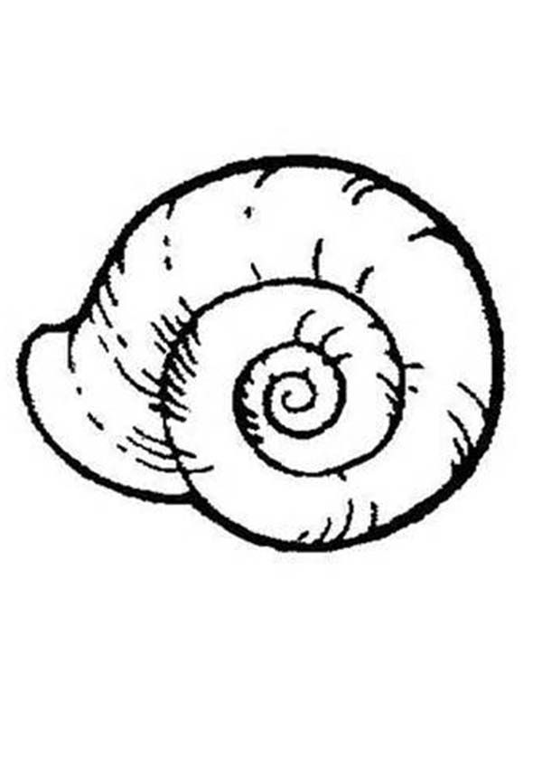 Seashell An Extinct Ammonoidea Seashell Coloring Page Family