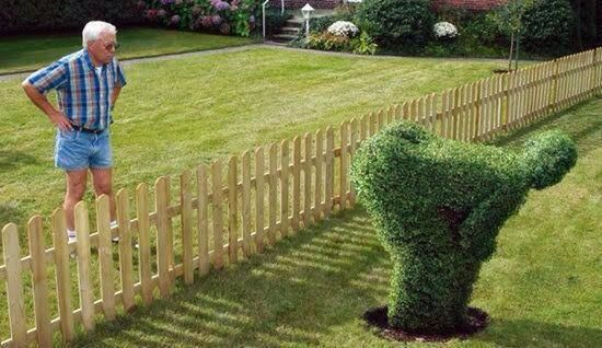 "A shrub ""mooning"" the neighbor. 