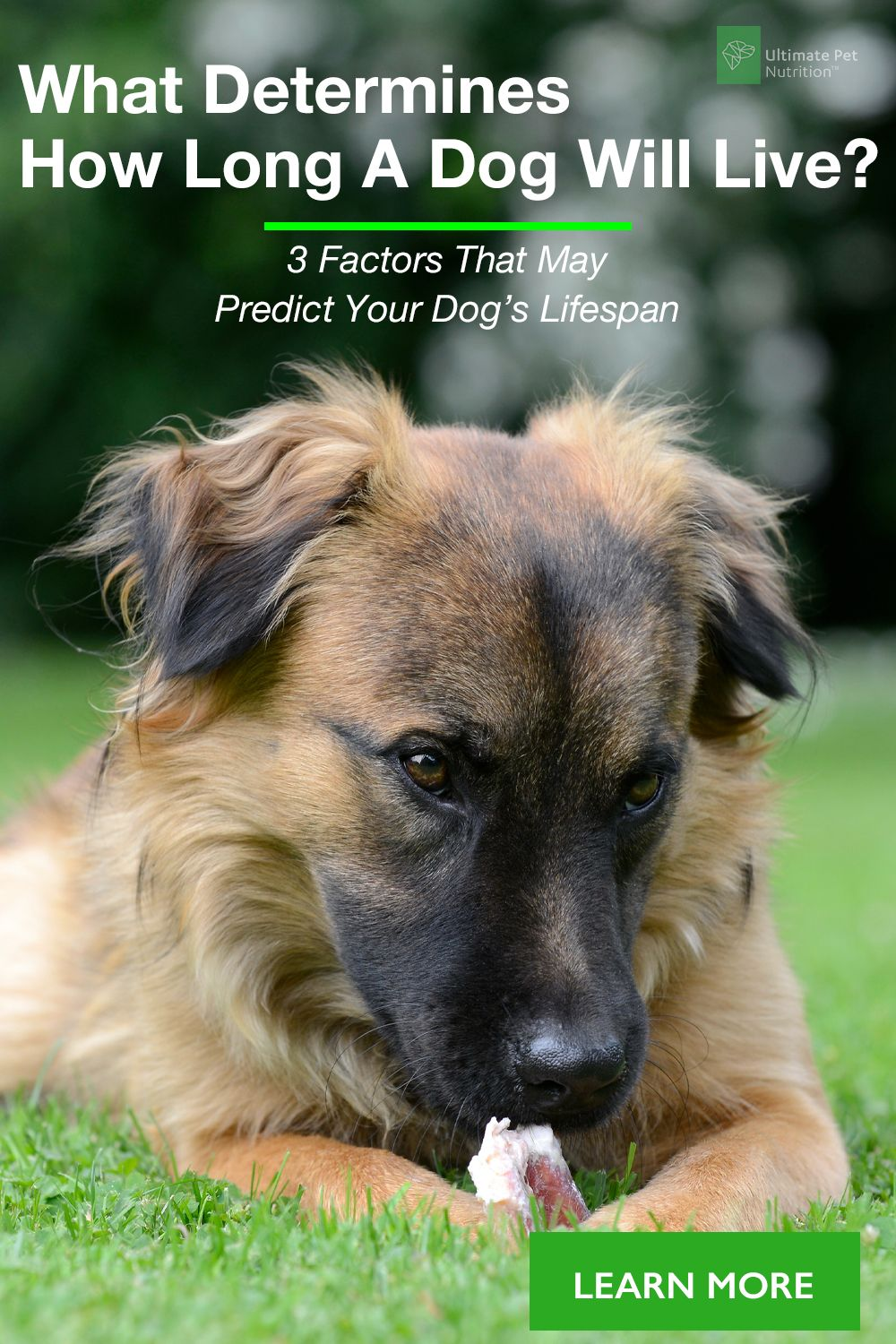 3 Factors That May Predict Your Dog S Lifespan Dogs Family
