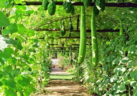 Faire pousser les petites courges courgettes concombre - Comment congeler les courgettes du jardin ...