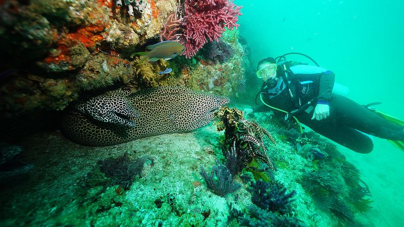 Diving with Extra Divers Sifah at Al Munassir Wreck (Oman 2015)
