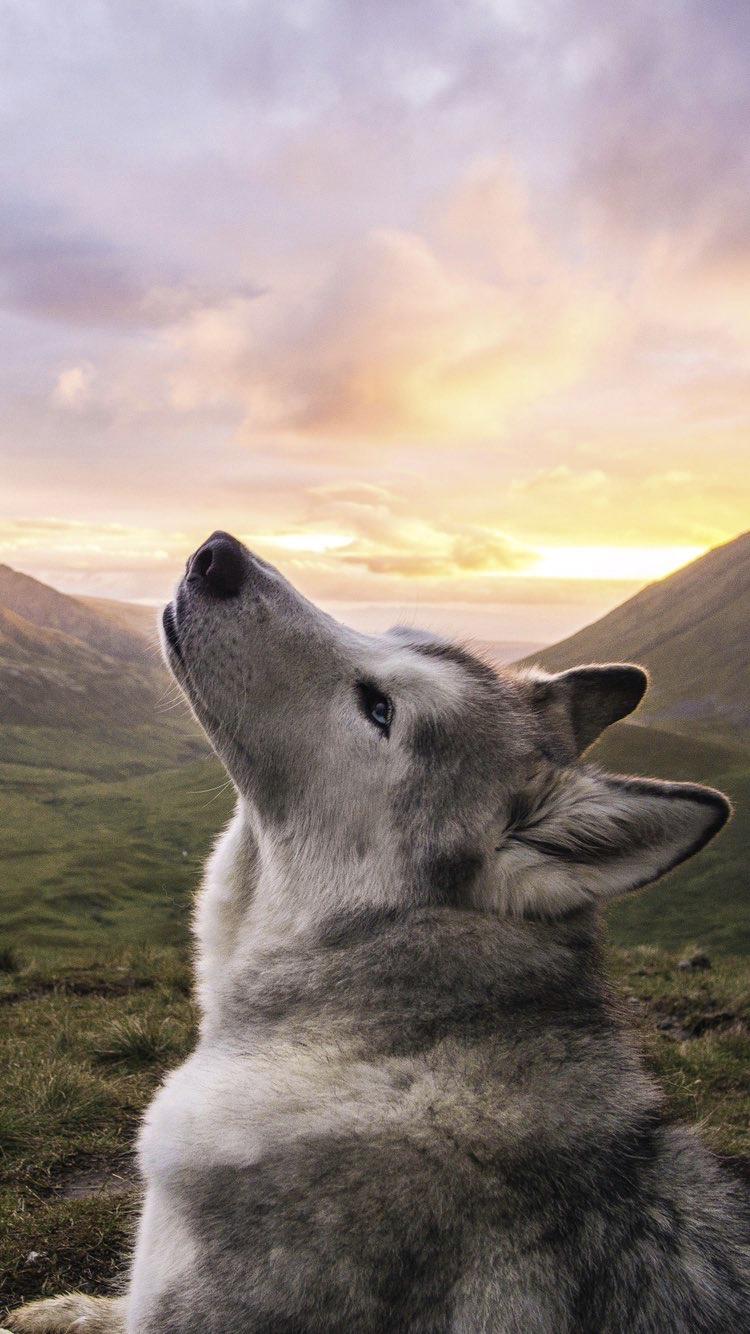 Photo of Gracias por todo hoy. #whatkindofdog Gracias por todo hoy.