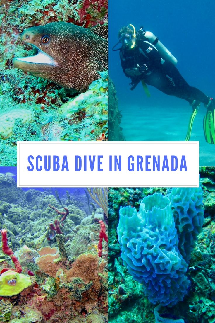 A Day Trip Scuba Diving In Grenada (With Images