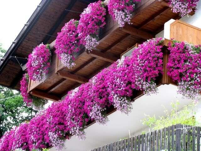 Terrazzo con fiori e piante greeeen piante gerani fiori da balcone