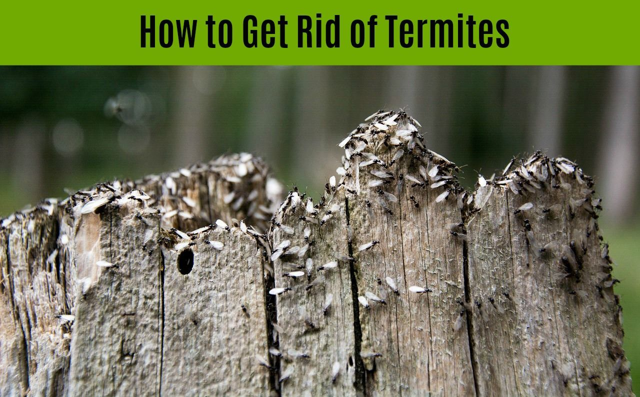 how to get rid of termites in your home - treatment options and cost