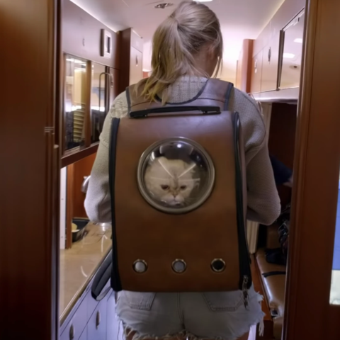 Taylor Swift Cat Backpack - Pet Cat Carrier With Bubble Window – Twisted Cart | Taylor swift cat, Cat backpack, Cat backpack carrier