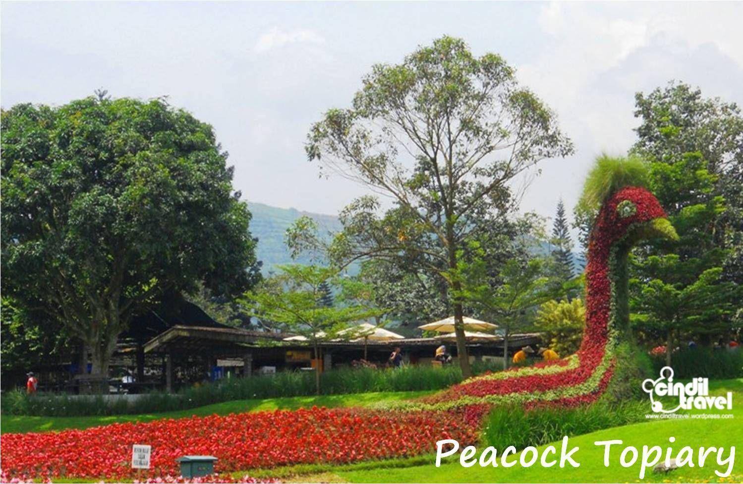 Taman Bunga Matahari Cianjur