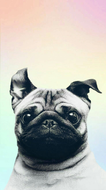 Pin By Ves Bcn On Pfff Pug Wallpaper Dog Wallpaper Cute Dog Wallpaper