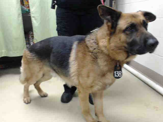 04 05 17 Houston Extremely Urgent Ace Id A480839 My Name Is Ace I Am A Male Black And Tan German Shepherd Dog The Animals Dogs Animal Shelter