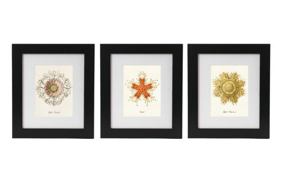 Ernst Haeckel Wall Art Print Sea Trio With Jellyfish and Starfish From Vintage Scientific Illustrations