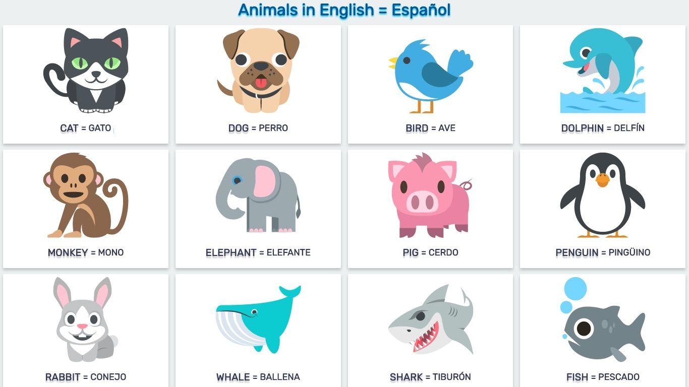 32 Email Pfizer Contact Usco Ltd Mail: Nombres De Animales En Espanol: CLÁSICOS GRIEGOS Y LATINOS