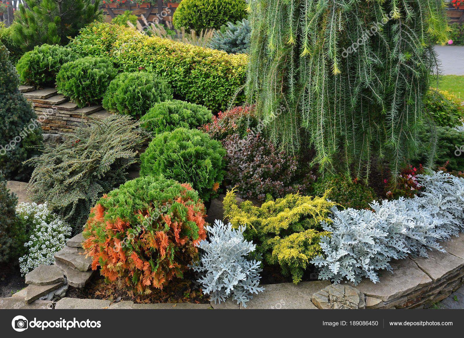 Cespugli Sempreverdi Con Fiori scarica - aiuola con alberi ornamentali, cespugli e fiori