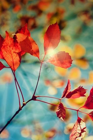 Download Autumn Leafs Sunlights Iphone Wallpaper Mobile