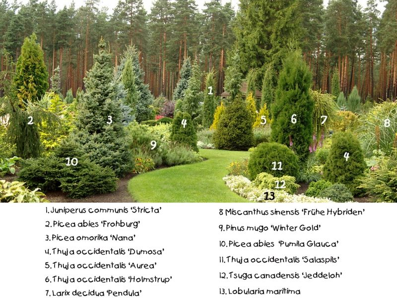 Conifer collection conifers pinterest landscaping gardens and yards - Evergreen landscaping ideas ...