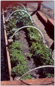 Southern California Veggie Garden