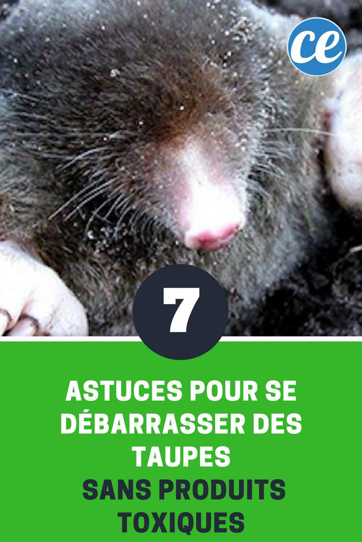 Remede De Grand Mere Pour Les Taupe : remede, grand, taupe, Épinglé, Anti-Insectes, Anti-Parasites