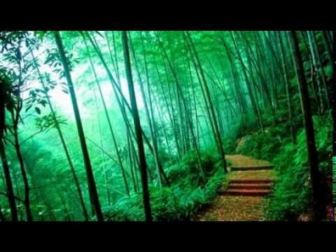 1 HOUR Pachelbel - Canon in D Major | music | Bamboo