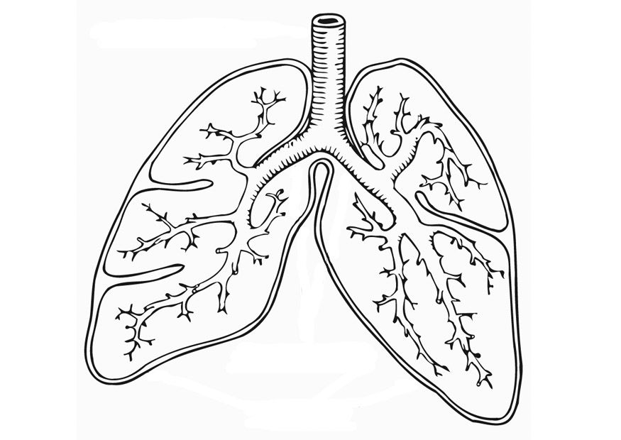 Lungs coloring worksheet