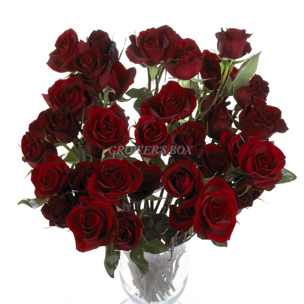 Black Magic Roses are sought after by name for their unique black/velvety red coloration. Black Magic Roses are classy flowers and are widely used in fundraising efforts. Selling fresh cut flowers is a great way to generate revenues for clubs, churches, schools and other organizations. Visit www.GrowersBox.com for more information on fundraising with flowers.