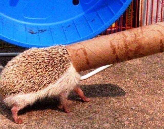 11 animais que se enfiaram nos lugares mais inusitados - Mega Curioso