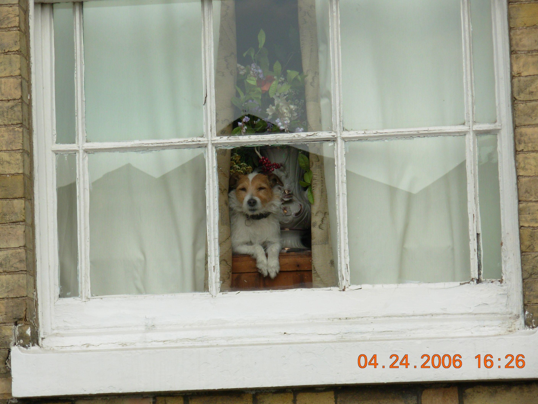 Cachorro solitário na janela (England 2006)