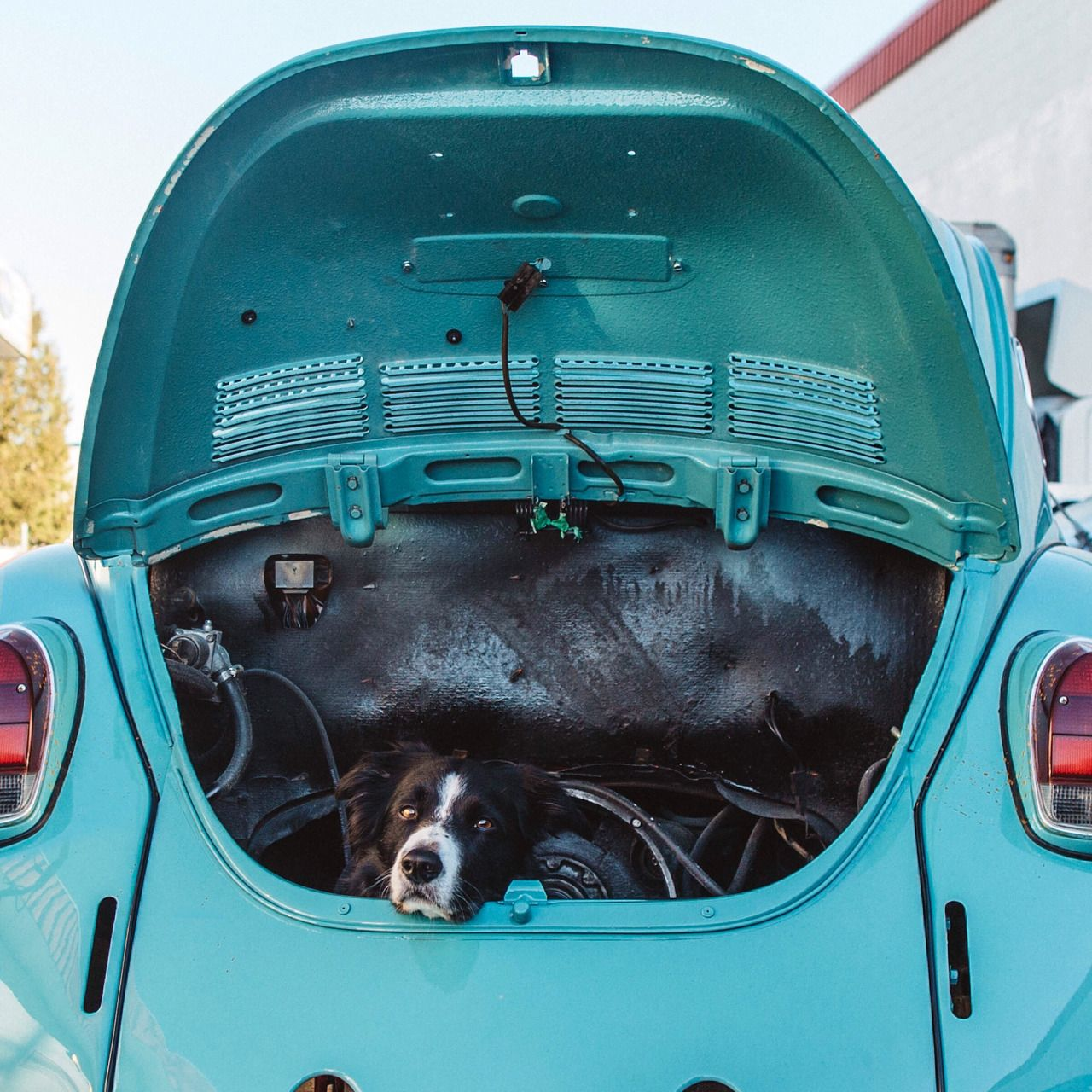"""The engine's in the back."" #enginebaydog"
