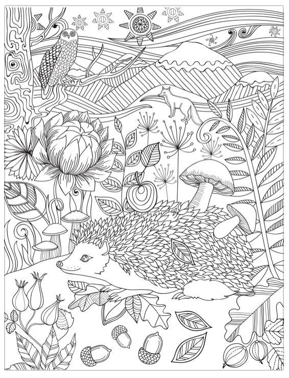 Hedgehog Coloring Page Omalovanky Zvirata A Podzim