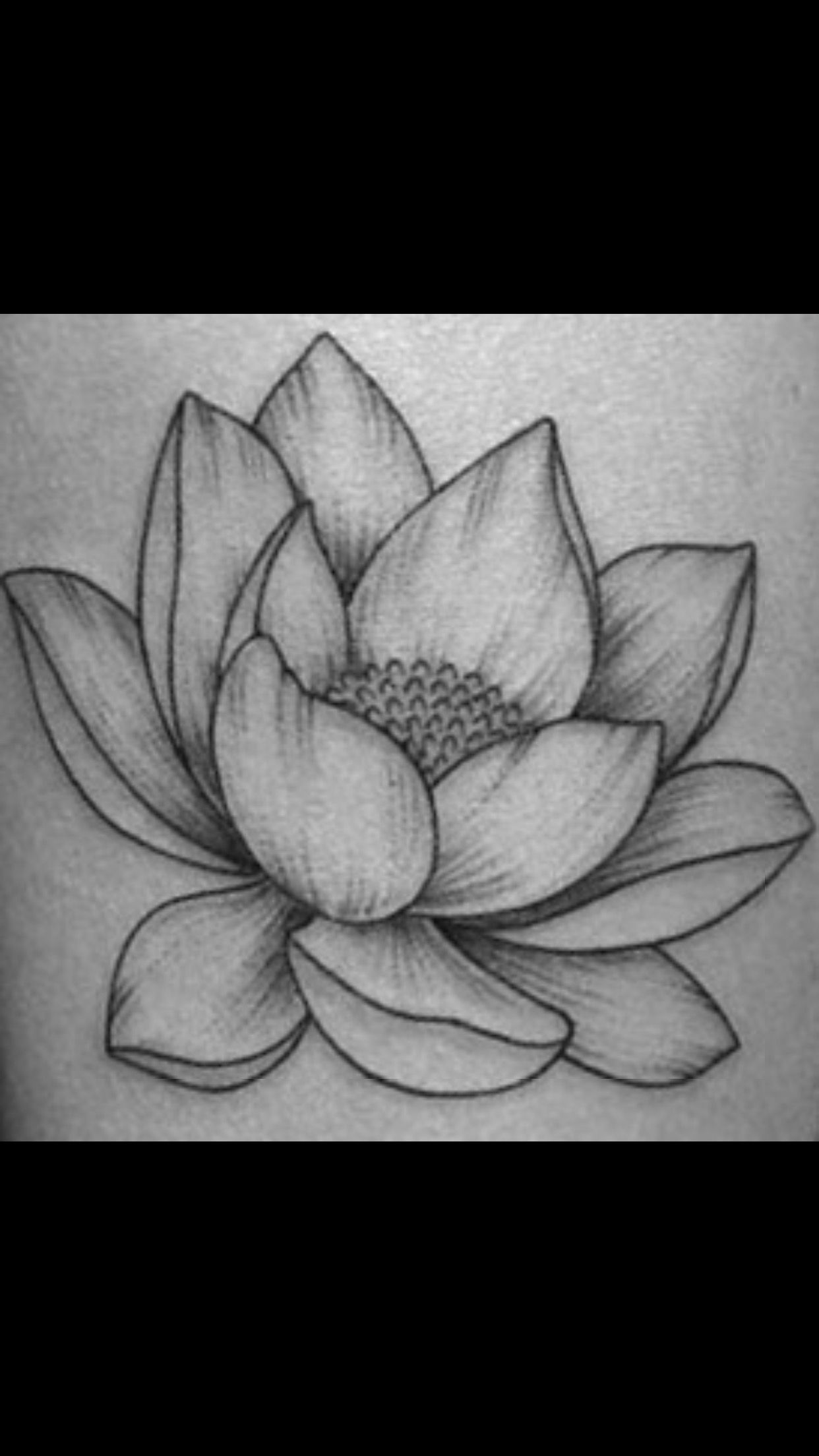 Lotus flower drawing Cool art Pinterest